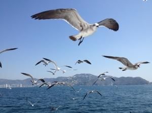 Seagulls in Acapulco