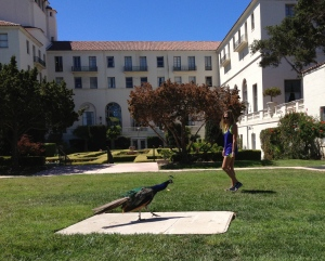 Penny found a Peacock in Monterey